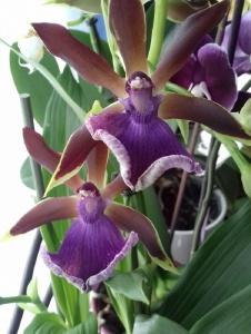Foto von Orchidee241