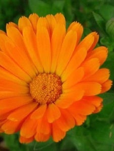 Picture of Naranja113