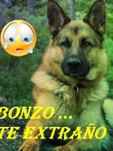 Foto de Bonzo2000