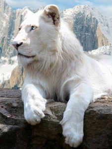 Foto de Lionwhite65