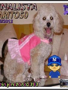 Foto de Jarito50