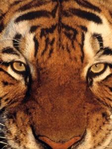 Foto de Tigre2001