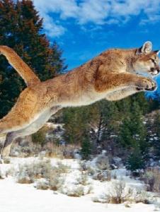 Foto de Puma1990
