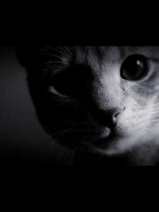 Foto de Koty9